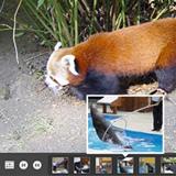 100 free photo/image galleries